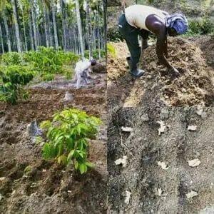 Soil Preparing procedure