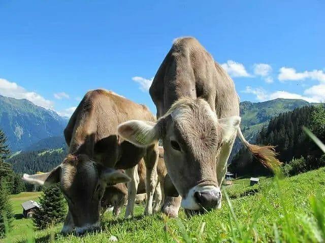 Case Study- Organic Beef Farm