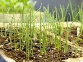 How to Grow Better Seedlings: