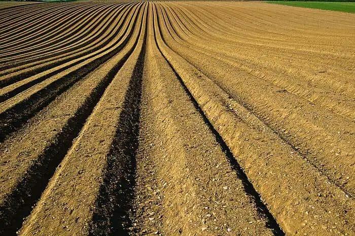 v shape - seed sowing method