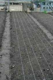 onion planting field outdoor