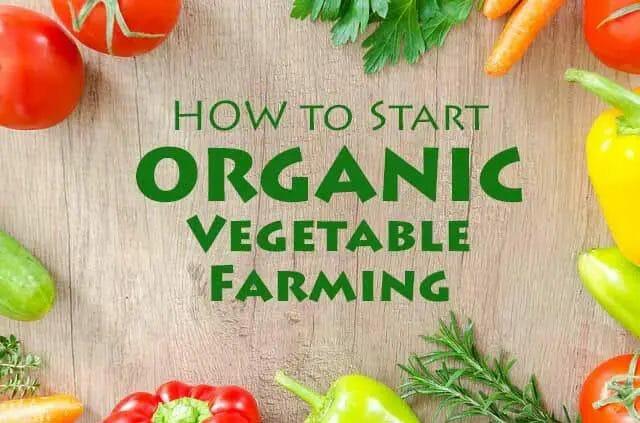 How To Start Organic Vegetable Farming