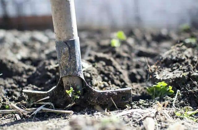 How to Start Organic Vegetable Garden