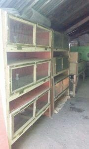 Low Cost Quail Growing Cage