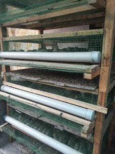 Cages for Layer Quail raising