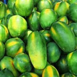 Harvesting Papaya