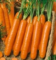 Amsterdam Carrots