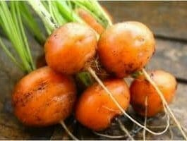 round types carrots