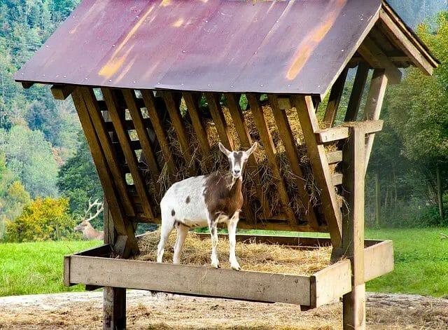 goat-feeds-list