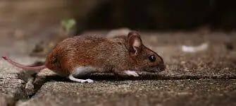 mouse trap reviews image