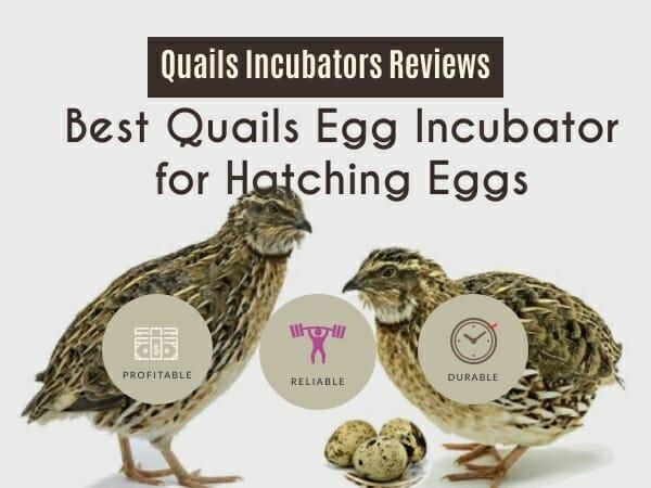 Best Quails Incubators