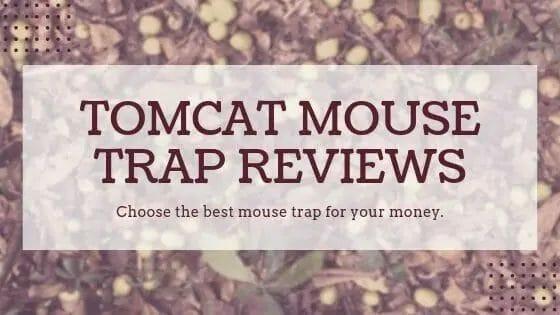Tomcat mouse trap reviews