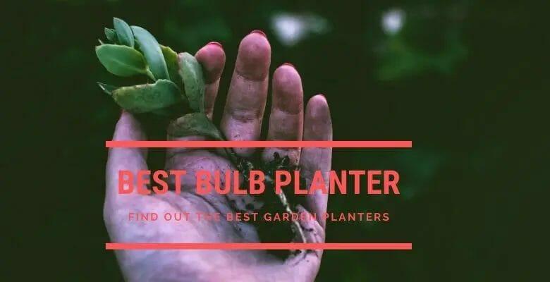 Best Bulb Planters