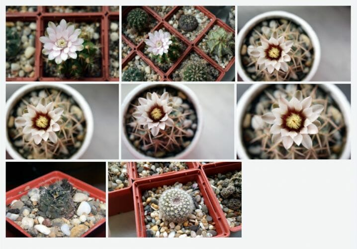 Growing Environment For Succulents