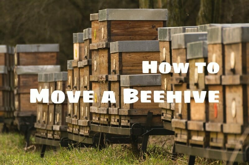 How to Move a Bee Nest