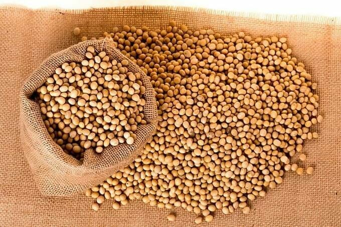 soy beans or soybeans