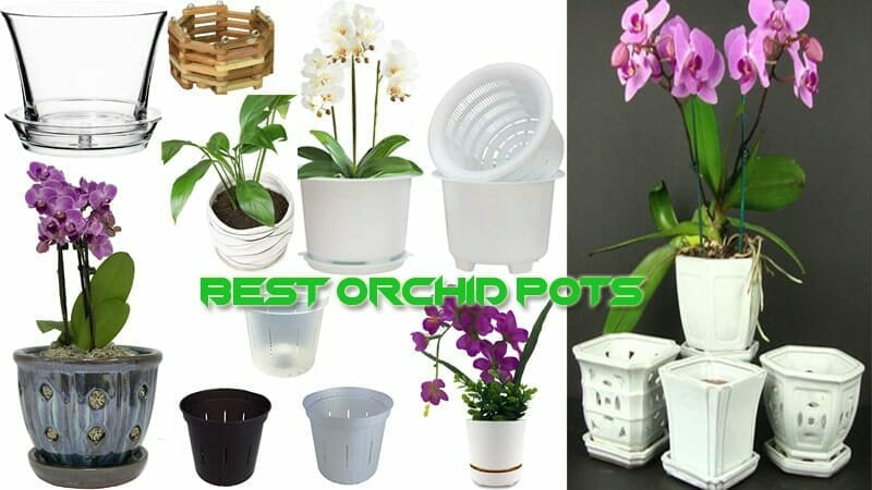 Best Orchid Pots Review