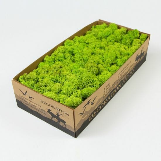 Growing Moss Indoor