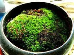 how to grow moss indoor