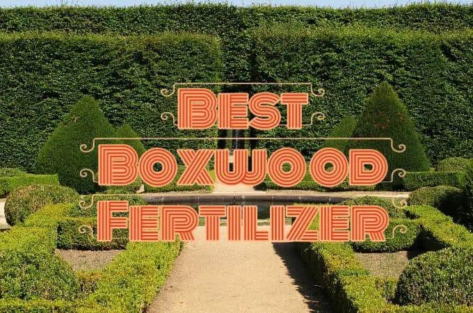 Best Boxwood Fertilizers with Fertilization Guide