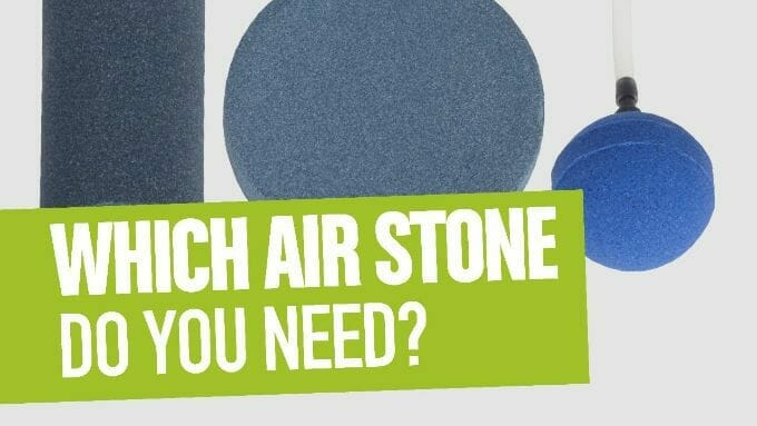 Best Airstones for DWC