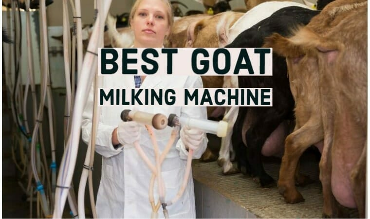 Best Goat Milking Machines