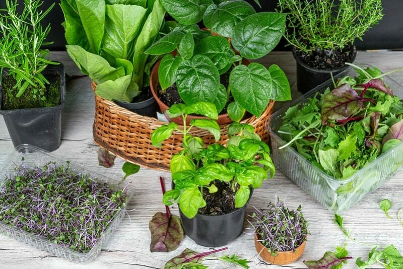 Care Tips for Potted Herbs