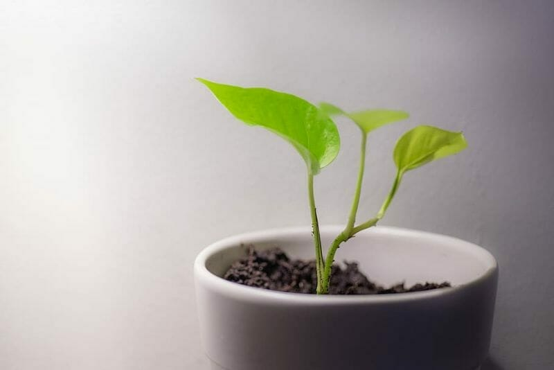How to Choose the Best Potting Soil for Herbs?
