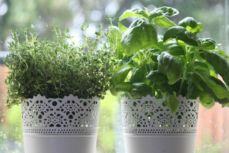 Tips for Growing Herbs in Containers