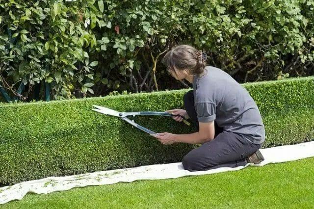 Hedge Shear