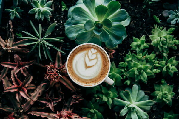 List of Houseplants That Like Coffee Ground