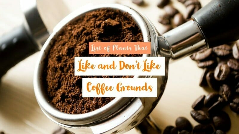 List of Plants That Like Coffee Grounds