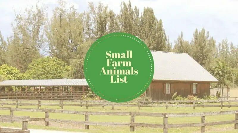 small farm animals list