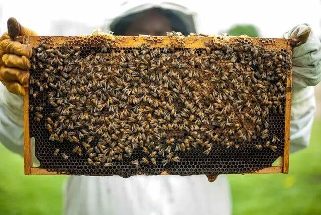 Best Bee Farming Guide