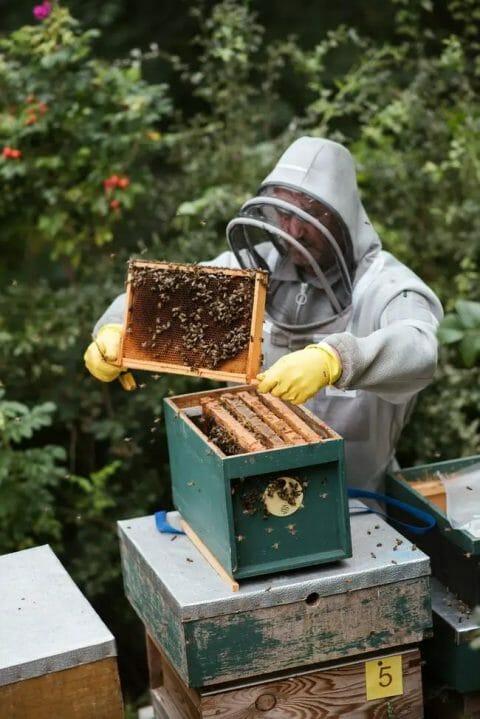Bee keeping equipment list