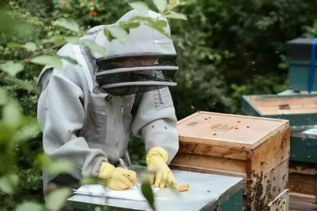 Honey Bee Farming Business Plan