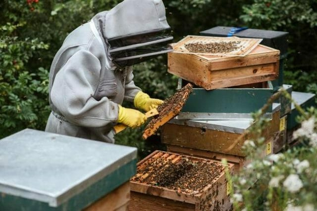 Learn to keep bees