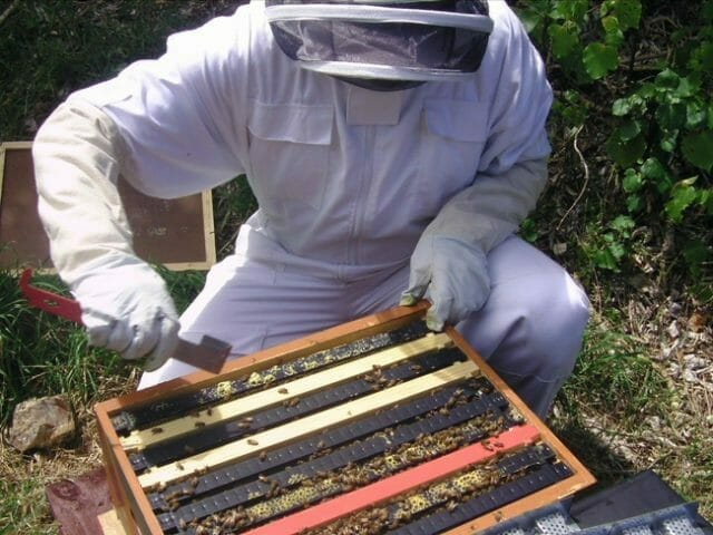 Start Bee farming in 10 Simple Steps