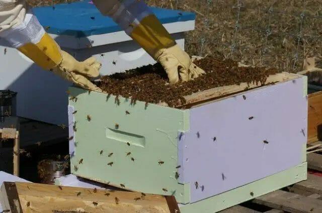 Start Modern Bee Farming
