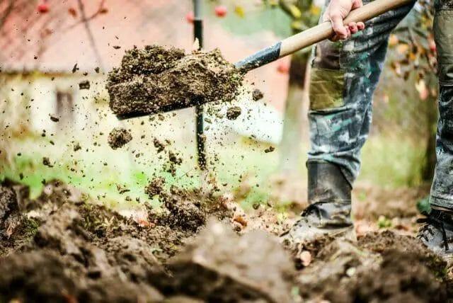 Ways to Loosen Soil without a Tiller