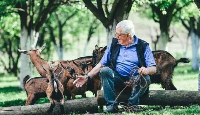 Entertaining Your Goats
