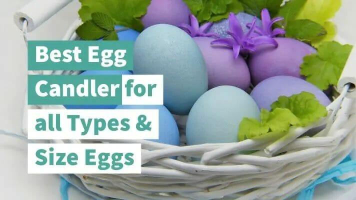 best egg candler review