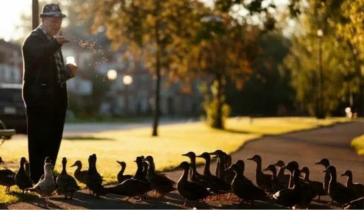 Care for Ducks